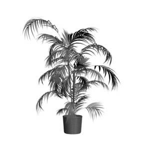 Butterfly Palm Plant 3DS Model for 3D Studio Max