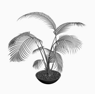 Areca Palm Plant 3D DWG Model for AutoCAD