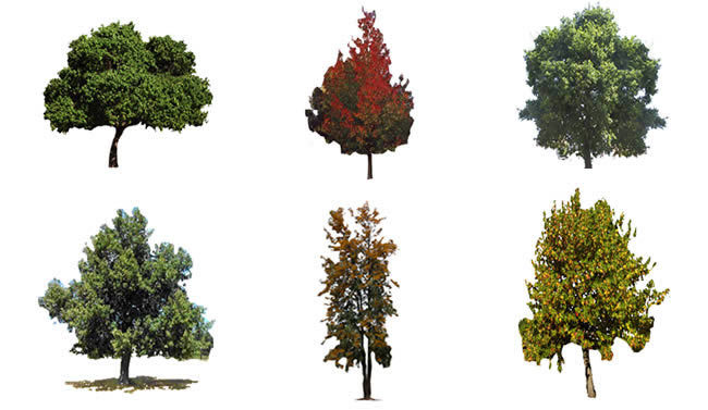 Trees Renders Pictures 2d Bmp Graphics Graphics Designs Cad