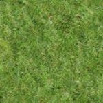 Grass Texture High Resolution 2 2D BMP Graphics Graphics