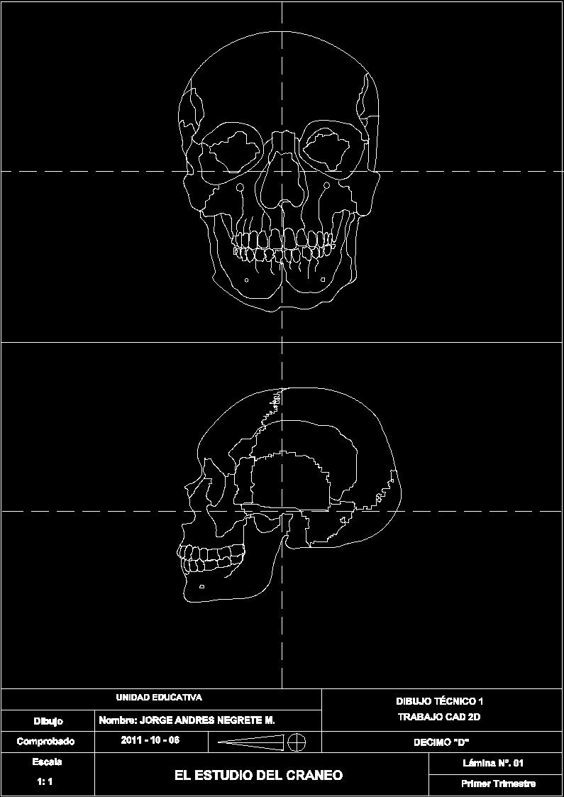 human skull dwg block for autocad  u2013 designs cad