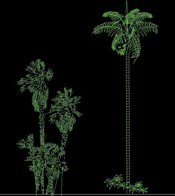 Palm Tree Plant Side View Elevation 2D DWG Block For