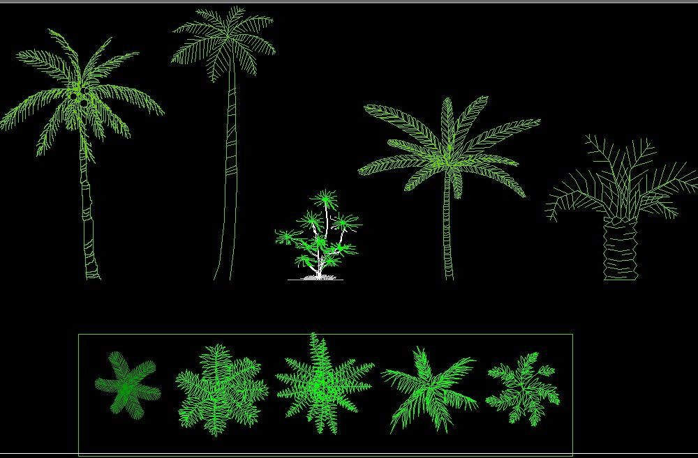 Coconut Palm Tree Plant Front View Elevation And Top View